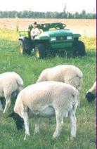 The evolution of an NC farm | SFNToday.com | North Carolina Agriculture | Scoop.it