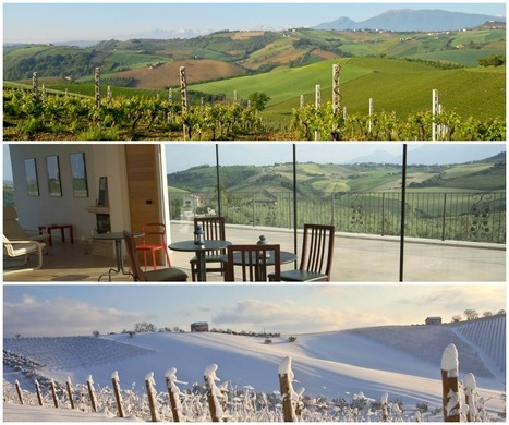 PS Winery Cantina: Paolini&Stanford Natural Wines Le Marche | Wines and People | Scoop.it