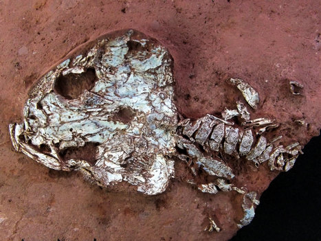 Ancient 'Fire Frog' Among Odd New Amphibians Found in Brazil   HS Science   Scoop.it