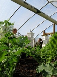 Cooperative Extension, High Country Local First Host Winter Crops Production ... - Hcpress | Local Food Systems | Scoop.it
