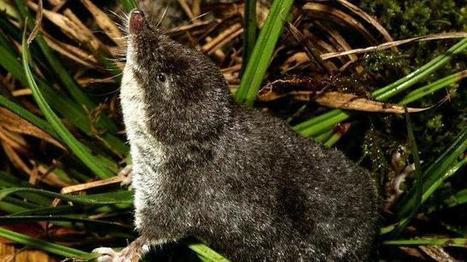Hallan una nueva especie de mamífero en la provincia de Málaga | Agua | Scoop.it