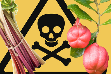 8 Insanely Dangerous Foods That People Actually Eat | Ajarn Donald's Educational News | Scoop.it