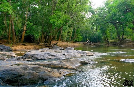 Natural Ambiance of Gavi Eco Tourism Spot | Tourism in Kerala | Scoop.it