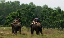 Chitwan jungle safari | Trekking in Nepal | Scoop.it