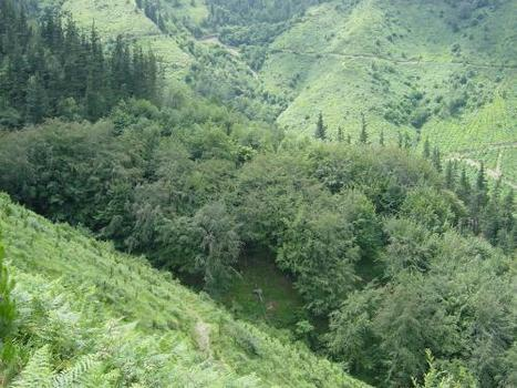 Pine plantations provide optimum conditions for natural forests to develop underneath them | Farming, Forests, Water, Fishing and Environment | Scoop.it