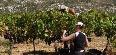 Le groupe AdVini se développe en Afrique du Sud | Le vin quotidien | Scoop.it