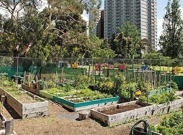 Community gardens are flourishing in Australia — City Farmer News | jardins partagés | Scoop.it