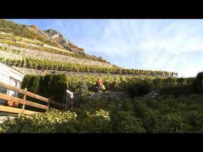 Mondes du vin | Le Valais | Vin, Culture & Société : articles, conférences, dossiers... en ligne | Scoop.it