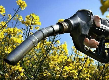 Les agrocarburants, coupables de la crise alimentaire ? | Actualité de l'Industrie Agroalimentaire | agro-media.fr | Scoop.it