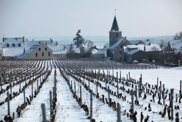 Burgundy 2011: Decanter's verdict | Vitabella Wine Daily Gossip | Scoop.it