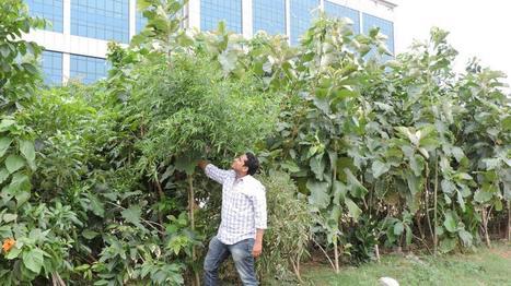 Un entrepreneur indien crée des petites forêts en milieu urbain | Toitures végétales & Biodiversité urbaine | Scoop.it