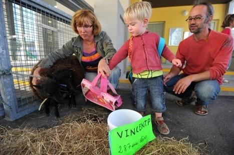 TRANSHUMANCE – Pour éviter une fermeture de classe, un mouton fait sa rentrée scolaire | L'enseignement dans tous ses états. | Scoop.it