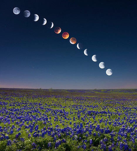 How I Shot the Blood Moon Lunar Eclipse Rising Over a Flowery Field | Everything Photographic | Scoop.it