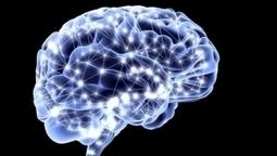 ¿Cuál es el secreto para mejorar tu cerebro? Deepak Chopra te lo dice - Salud -  CNNMéxico.com   el cerebro:Introducción a la neurociencia   Scoop.it