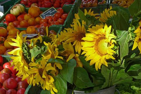 Des tournesols parmi les légumes | The Blog's Revue by OlivierSC | Scoop.it