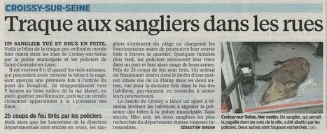 3 sangliers font la Une | Divers | Scoop.it