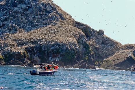 11 îles qui vous donneront envie de connaître la Bretagne - checkin | Week-end romantique en Bretagne Sud Morbihan | Scoop.it