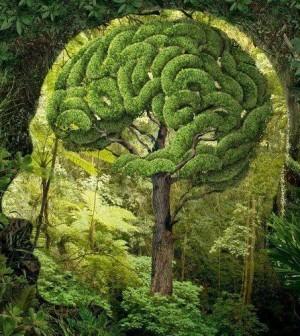 L'effetto benefico della natura sulla mente: 10 studi scientifici | Parliamo di psicologia | Scoop.it