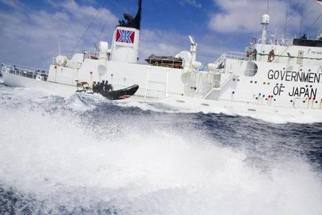 Government stays mute as Japan ups the ante in whaling conflict   Dolphins   Scoop.it