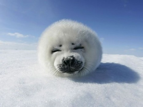 20 Beautiful Pictures Of Cute Animals   Abgefahrene Tiere   Scoop.it