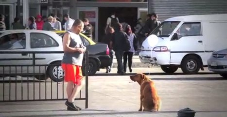 'I Am Here': The Dog Advocacy Campaign Video For Strays That ... | Animals R Us | Scoop.it