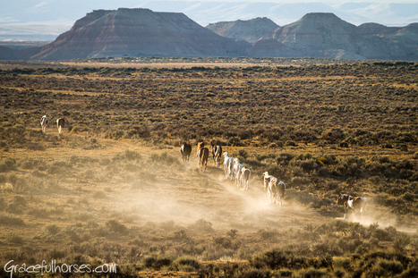 Wild Mustangs of Big Horn Basin Wyoming | Canadian Equine Photographer | | Countryside affairs, walks, Fishing an local craft beers. | Scoop.it