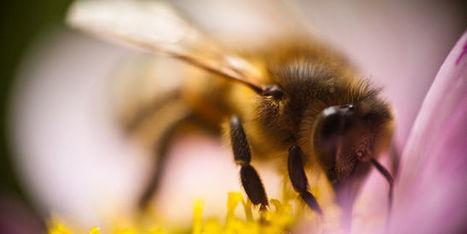 Les #députés votent une #interdiction des #pesticides tueurs d'#abeilles #DD | RSE et Développement Durable | Scoop.it