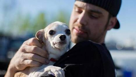 Ft. McMurray's animals and the evolution of human empathy | Empathy and Animals | Scoop.it
