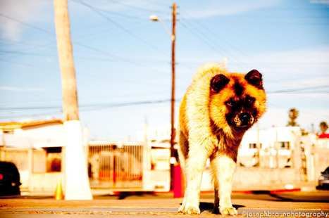 Photography Blog: Colors of Mexico - Street Photography - by Joseph Braun | Photography Blog | Scoop.it