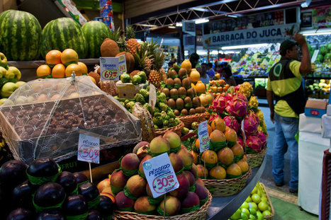 German NGO says TTIP will undermine global food security | Agriculture and Farming | Scoop.it