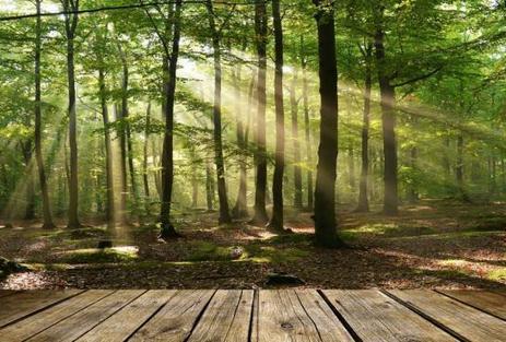 Autour du monde : 7 tendances en matière d'écologie | Quatrième lieu | Scoop.it