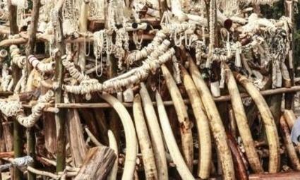 Hong Kong abolirá por completo el comercio de marfil | Agua | Scoop.it