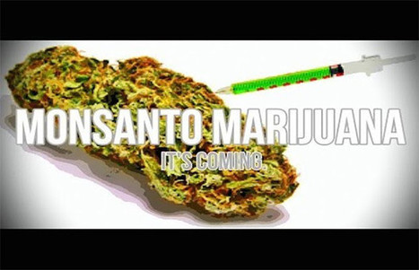 Why Legalize Marijuana? Because GMO Pot Is On Its Way   Plant Based Transitions   Scoop.it