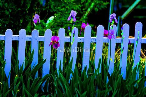 Iris                                                                             9772 by KarenDinan | Photography | Scoop.it