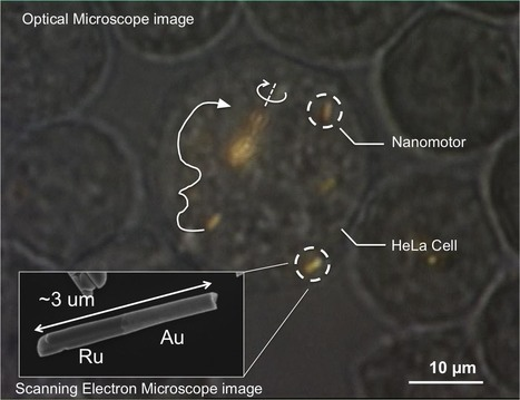 Nanomotors are controlled, for the first time, inside living cells (w/ video) | Education Technology | Scoop.it