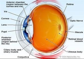 Most Detailed Molecular Map for Eye Disease - Tasnim News Agency | Optometry | Scoop.it