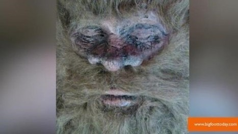 Bigfoot killed: Scammer Rick Dyer claims he killed Bigfoot, is on tour with body - Examiner.com | TommyS 3 | Scoop.it