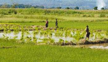 Accroître les investissements publics dans l'agriculture en Afrique | SécuriteAlimentaireSahel | Scoop.it