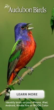 Blue Jay | National Audubon Society Birds | Blue Jays | Scoop.it