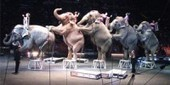 Elephants retire from a circus | FOTOTECA LEARNENGLISH | Scoop.it