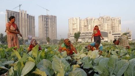 OMC: l'Inde prête au veto sur l'agriculture | the world agriculture | Scoop.it