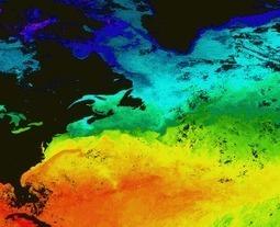 Global warming: Goodbye to sea scallops?   Aquaculture Directory   Scoop.it