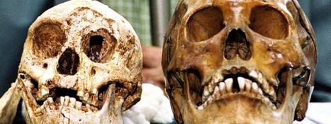 Les hommes de Florès ne sont pas une espèce humaine à part, mais des Homo sapiens  trisomiques | Rescoop -Faune - Flore - Environnement | Scoop.it