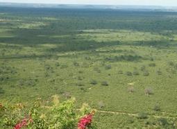 Two more rhinos killed in Tsavo as poaching escalates | Rhino | Scoop.it