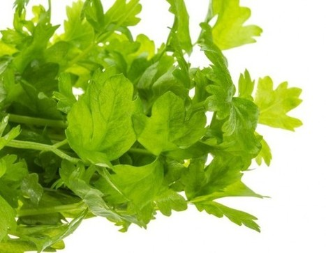 Interesting Facts about Celery – Learn its Benefits and Usage | eCellulitis | Healthy Food Tips & Tricks | Scoop.it