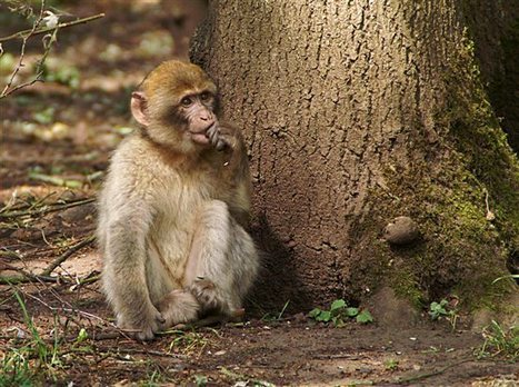 Victory: China Eastern Airlines Will No Longer Ship Primates to Labs! | Nature Animals humankind | Scoop.it