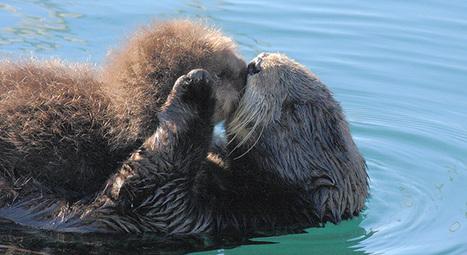 Wildlife Babies! | GarryRogers Biosphere News | Scoop.it