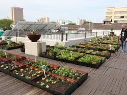 Sky's the limit for rooftop farming - KwaZulu-Natal   IOL News   IOL.co.za   Food issues   Scoop.it