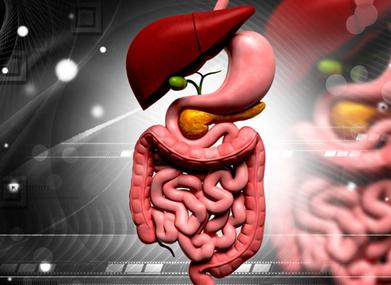 LUMC stelt kennis over anatomie voor iedereen beschikbaar | LUMC | Open and online learning | Scoop.it