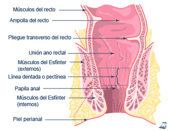 Sexo anal. Anatomía | new | Scoop.it